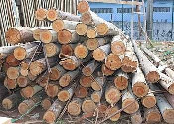 Caneta de ponta de feltro para madeira